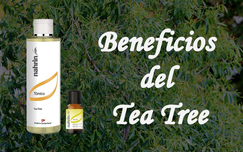Beneficios del Tea Tree